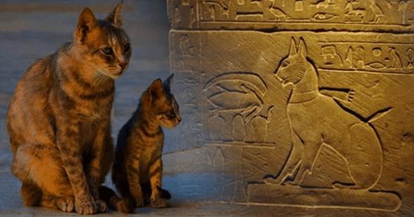 cats history